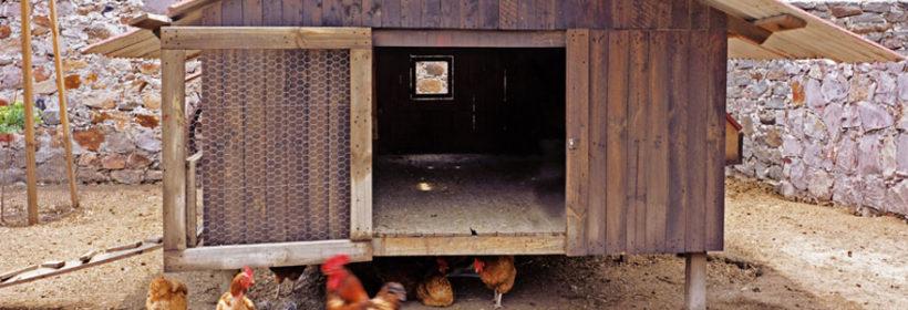 Poulaillers et cabanes à poules